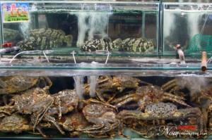 Alaska Spider Crab
