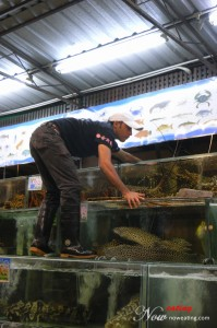 Worker selecting lobsters